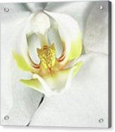 My Inner Orchid Acrylic Print