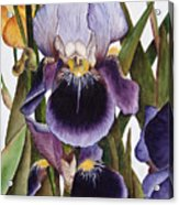 My Iris Garden Acrylic Print