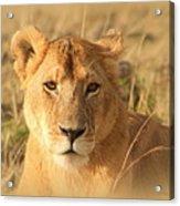 My Lion Eyes Acrylic Print