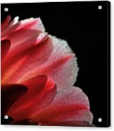 My Little Cactus Flower Acrylic Print