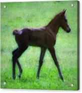 My Little Pony Acrylic Print