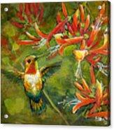 My Loving Hummingbird Acrylic Print