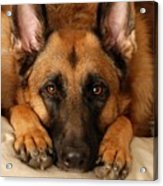 My Loyal Friend Acrylic Print