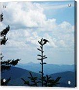 My Mountain Bird Acrylic Print