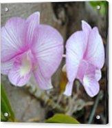 My Orchid # 15 Acrylic Print