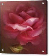 My Ordinary Rose Acrylic Print