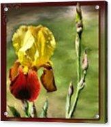 My Painted Iris Acrylic Print