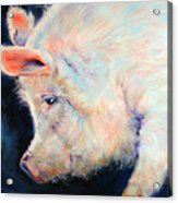 My Pink Pig  For A Lucky Day By M Baldwin Acrylic Print