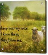 My Sheep Hear My Voice Acrylic Print