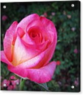 My Special Rose Acrylic Print