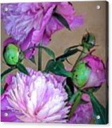 My Spring Garden Peony Acrylic Print