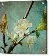 My Springtime Acrylic Print