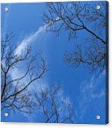 My Trees No.13 Acrylic Print