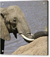 My Trunk Needs Drying Out Acrylic Print