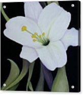 My White Lily Acrylic Print
