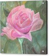 My Wild Irish Rose Acrylic Print