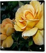My Yellow Rose Acrylic Print