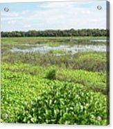 Myakka River And Marshes Acrylic Print