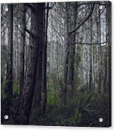 Myakka Woods Acrylic Print