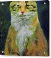 Mysterious Cat Acrylic Print