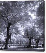 Mysterious Park Acrylic Print