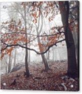 Mysterious Woods  Acrylic Print