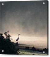 Mystery Heron Acrylic Print