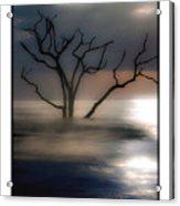Mystery Tree Acrylic Print