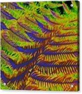 Mystic Fern Acrylic Print