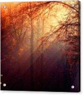 Mystic Forest At Dawn L A Acrylic Print