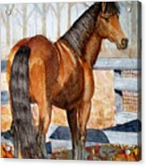 Mystic In Her Paddock Acrylic Print