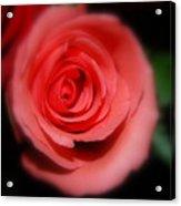 Mystic Pink Acrylic Print