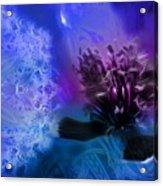 Mystic Poppy Blue Purple  Acrylic Print