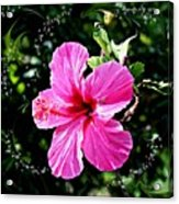 Mystical Bloom Acrylic Print