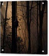 Mystical Woods Acrylic Print
