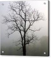 Mysty Tree 3 Acrylic Print