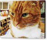 猫の度アップ #猫カフェ Acrylic Print