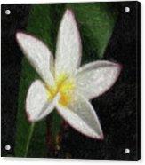 Na-17 Acrylic Print