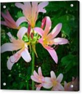 Naked Ladies Really Acrylic Print