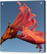 Naked Lady Acrylic Print