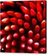 Naked Porcupine Acrylic Print