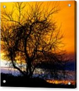 Naked Tree Acrylic Print