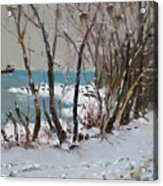 Naked Trees By The Lake Shore Acrylic Print by Ylli Haruni