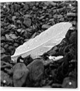 Nameless Feather 2 Acrylic Print