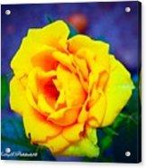 Nana's Yellow Rose Acrylic Print