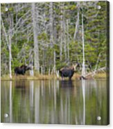 Nancy Pond - White Mountains New Hampshire USA Acrylic Print