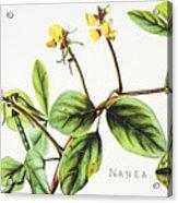 Nanea Flower Art Acrylic Print