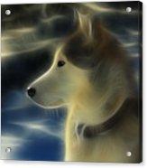 Nanuk Husky Fractal Acrylic Print by Marjorie Imbeau