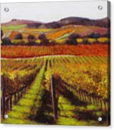 Napa Carneros Vineyard Autumn Color Acrylic Print