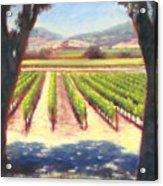 Napa Wine Vineyard Summer Acrylic Print